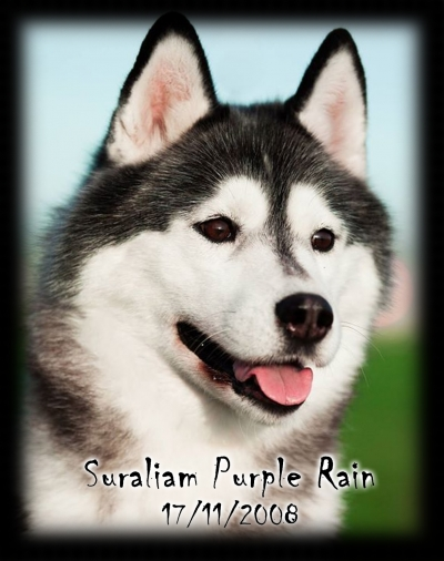 Suraliam Purple Rain